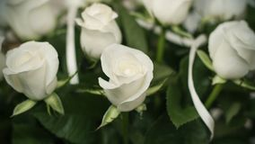 Soft full blown white roses as a background, clouse-up stock photos