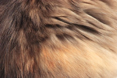 Soft fur texture Royalty Free Stock Image