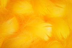 Soft and gentle theme with feathers Royalty Free Stock Images