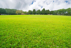 Soft GGreen plain with trees Royalty Free Stock Photo