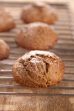 Soft ginger cookies cooling Stock Images