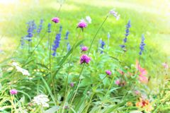 Beautiful Wildflower Garden Stock Image