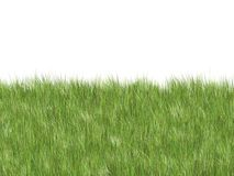 Soft grass royalty free stock photos
