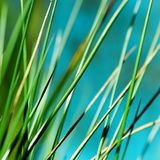 Soft Grass Royalty Free Stock Photography