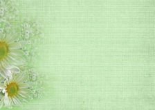 Soft Green. Daisy and baby's breath border on soft textured green background stock illustration