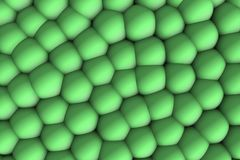 Soft green celular relief 3d in shadows. Ludic and infant image of scientific inspiration to teach a complete group Stock Illustration