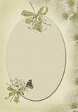 Soft green daisy border Stock Photography