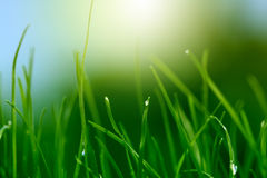 Soft green grass background Stock Image