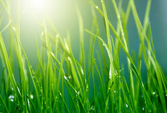 Soft green grass background Stock Photos