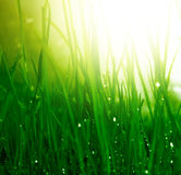 Soft green grass background. With water drops Stock Images