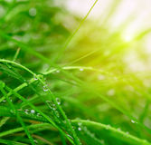 Soft green grass background Royalty Free Stock Photo