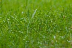 Soft green grass background Stock Photos