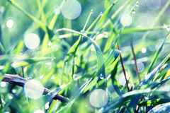 Soft green grass background Royalty Free Stock Photos