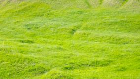 Soft green grass in the meadow. Natural background Stock Photo