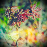 Soft green leaves Royalty Free Stock Image