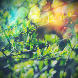 Soft green leaves Royalty Free Stock Photos