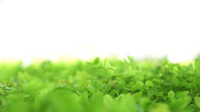Soft green lush plant field background with blur bokeh and half Royalty Free Stock Photo