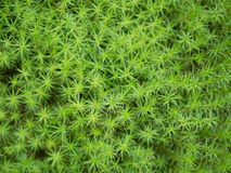 Soft green moss background. From the top view Royalty Free Stock Photos