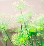 Soft green nature abstract background stock photo