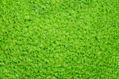 Soft green porous texture, surface. Stock Photography