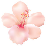 Soft Hibiscus. Flower vector illustration vector illustration