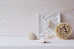 Soft home decor;  shells and corals on white wooden background. Stock Image