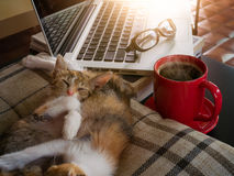 Soft image adorable cats  and red cup coffee with  and  tablet. Stock Photography