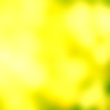 Soft light abstract background. Green bokeh abstract light bac. Yellow SummerSoft light abstract background. Green and yellow   bokeh abstract light background Stock Photo