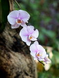 Soft light purple orchids with romantic background Stock Photography