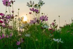 It Soft lighting when sunset. Is get flora beautiful too stock photo