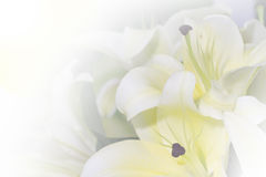 Soft lily flower Royalty Free Stock Image