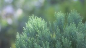 Soft mood of tropical green bush in the garden. Relax, bokeh, sunny, sunshine, summer, plants, tree, nature stock image