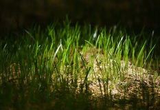 Soft morning light above green grass Stock Images