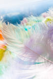 Soft multicolored feather photo with bokeh background. Stock Photo