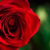 Soft natural light falling onto a velvet blood-red Stock Photos