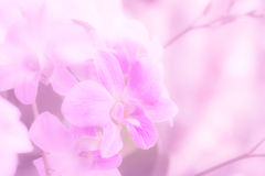Soft  orchid pastel color for background Stock Photos