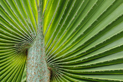 Soft palm leaves Stock Photos