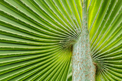 Soft palm leaves Stock Photo