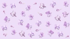 Pastel background with lilac flowers. Royalty Free Stock Photo