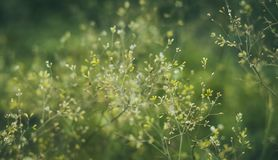 Soft pastel green flowery bokeh backdrop stock photo
