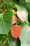 Soft peak Leaves royalty free stock photos