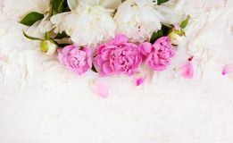 Soft peony flowers background Royalty Free Stock Photos