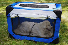 Soft pet crate, portable dog house. Stock Photos