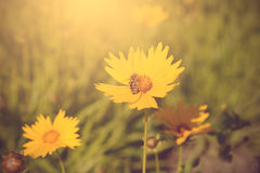 Soft photo of a beautiful bee and flowers Stock Image