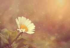 Soft photo of wildflower in sunset Stock Images