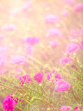 Soft pink flower background Royalty Free Stock Photos