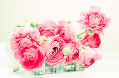 The soft pink flowers in a white box Stock Image