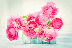 The soft pink flowers in a white box Stock Photos