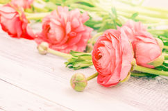 The soft pink fresh flowers Stock Image