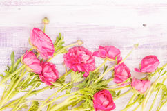 The soft pink fresh flowers Royalty Free Stock Images